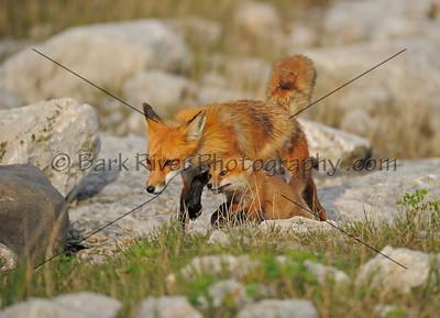 05 17 10 Fox200 e