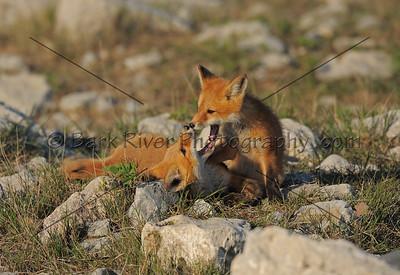 05 17 10 Fox037 e
