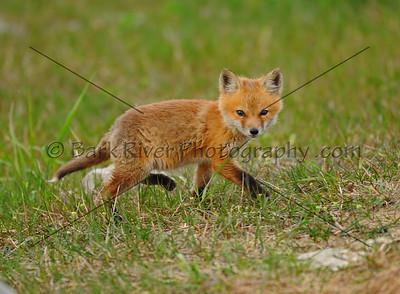 05 08 10 Fox109 e