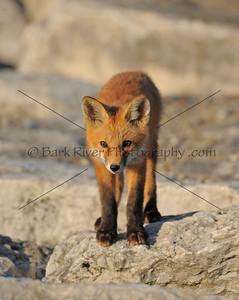 05 17 10 Fox050 e