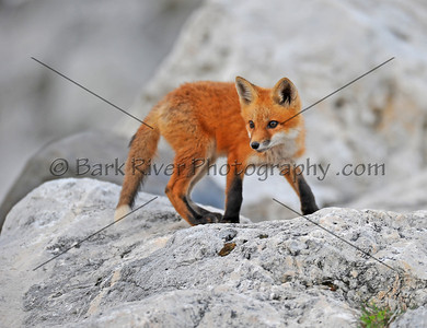 05 08 10 Fox191 e