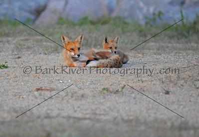 05 19 10 Fox364 e