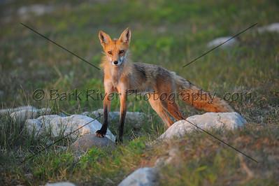 05 19 10 Fox258 e