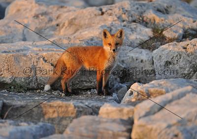 05 19 10 Fox233 e