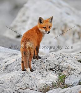05 08 10 Fox246 v e