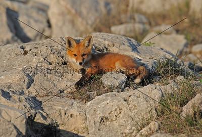 05 17 10 Fox018 e