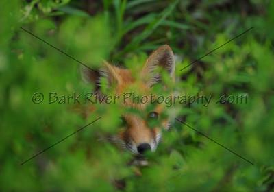 05 17 10 Fox739 e