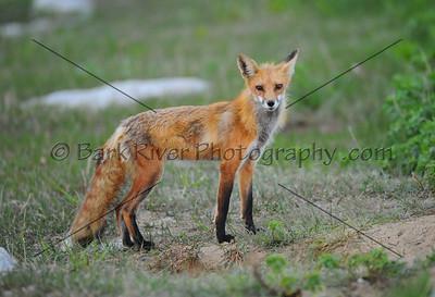 05 08 10 Fox562 e