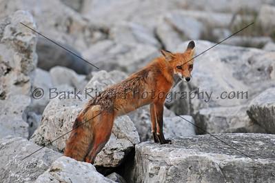 05 22 10 Fox D300089 e