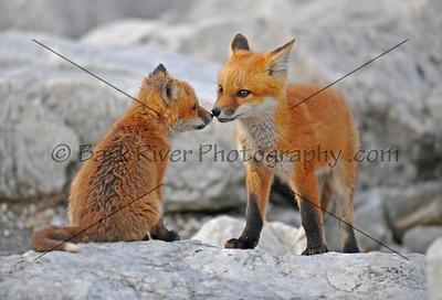 05 08 10 Fox036 e