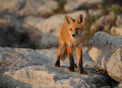 05 22 10 Fox022 e