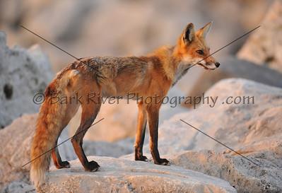 05 22 10 Fox134 e