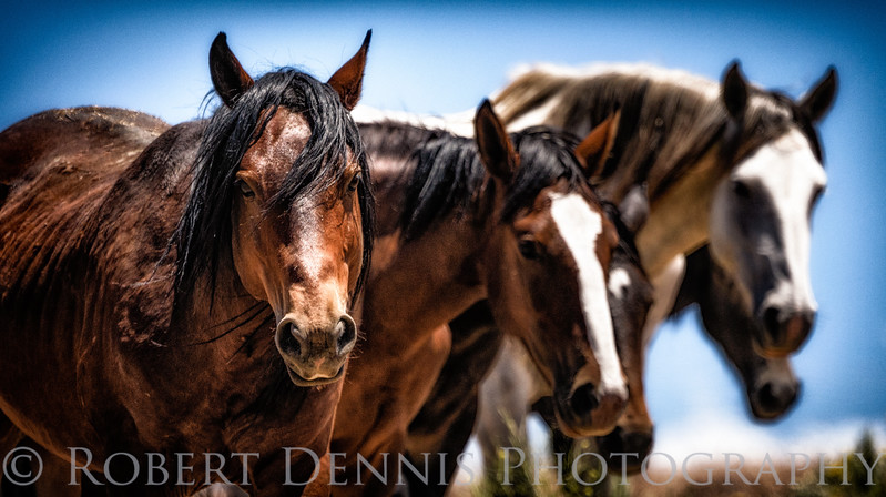 Wild Horses, north of Carson City, NV, at Washoe Lake