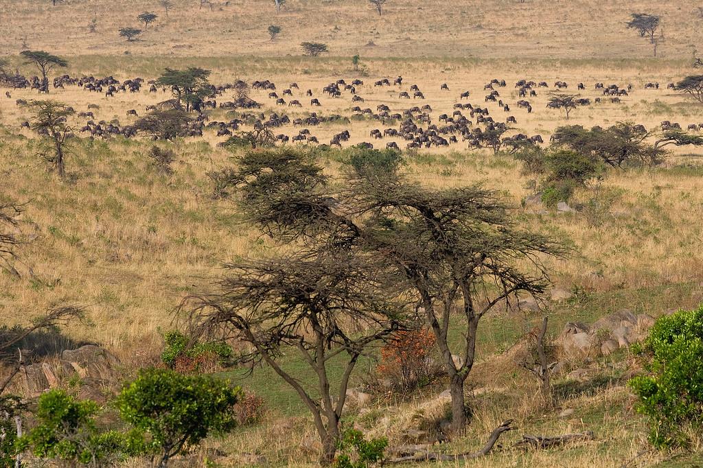 20100910_Maasi Mara_404
