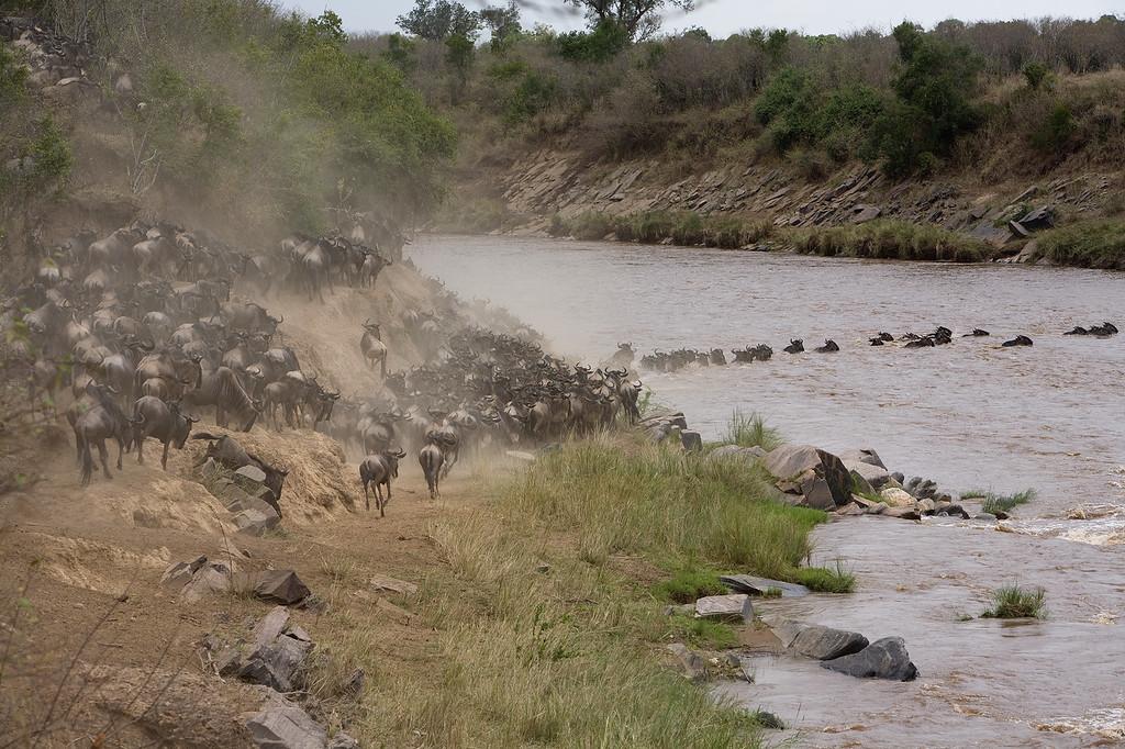 20100911_Maasi Mara_550