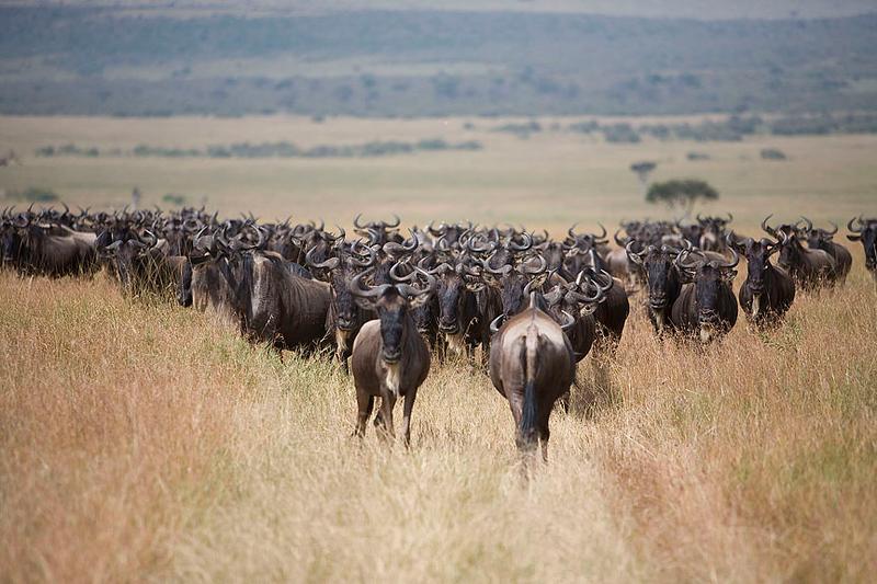 2007 07 24 Masai Mara 449