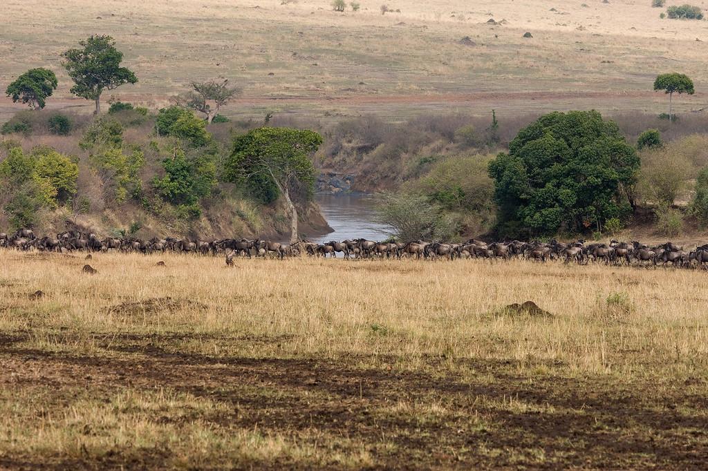 20100911_Maasi Mara_273