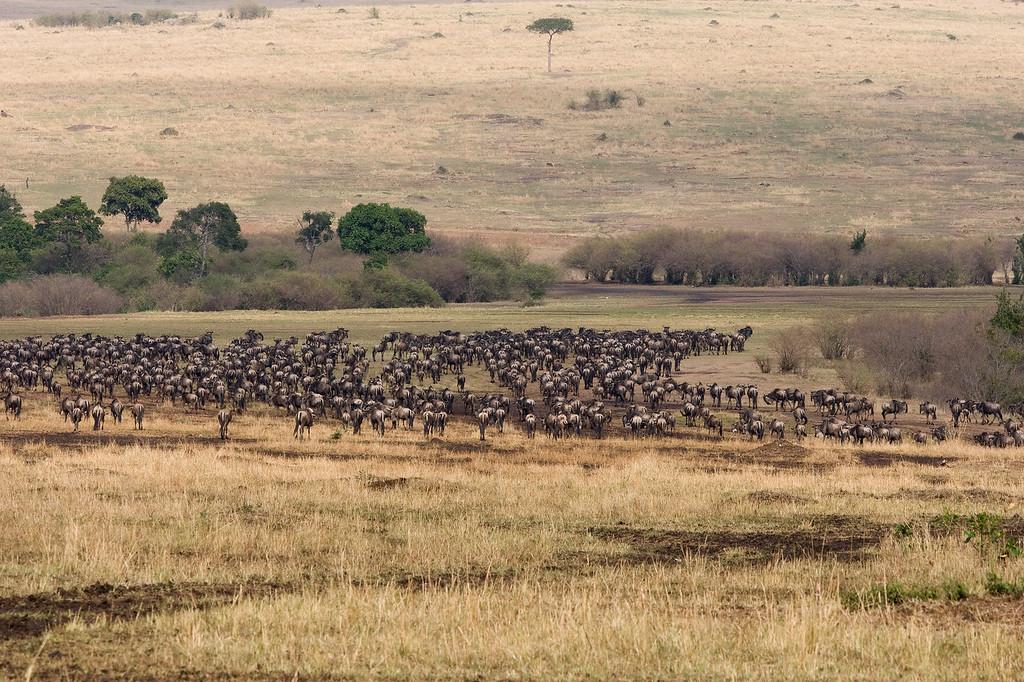 20100911_Maasi Mara_274