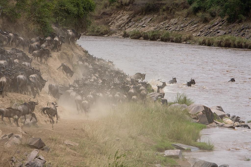 20100911_Maasi Mara_543