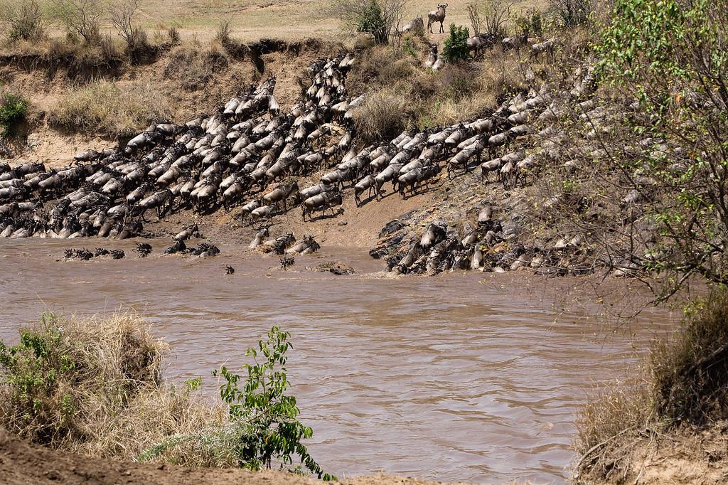 20100911_Maasi Mara_484