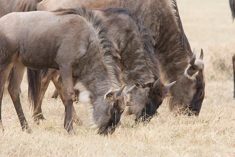 2007 07 18 Ngorongoro 378