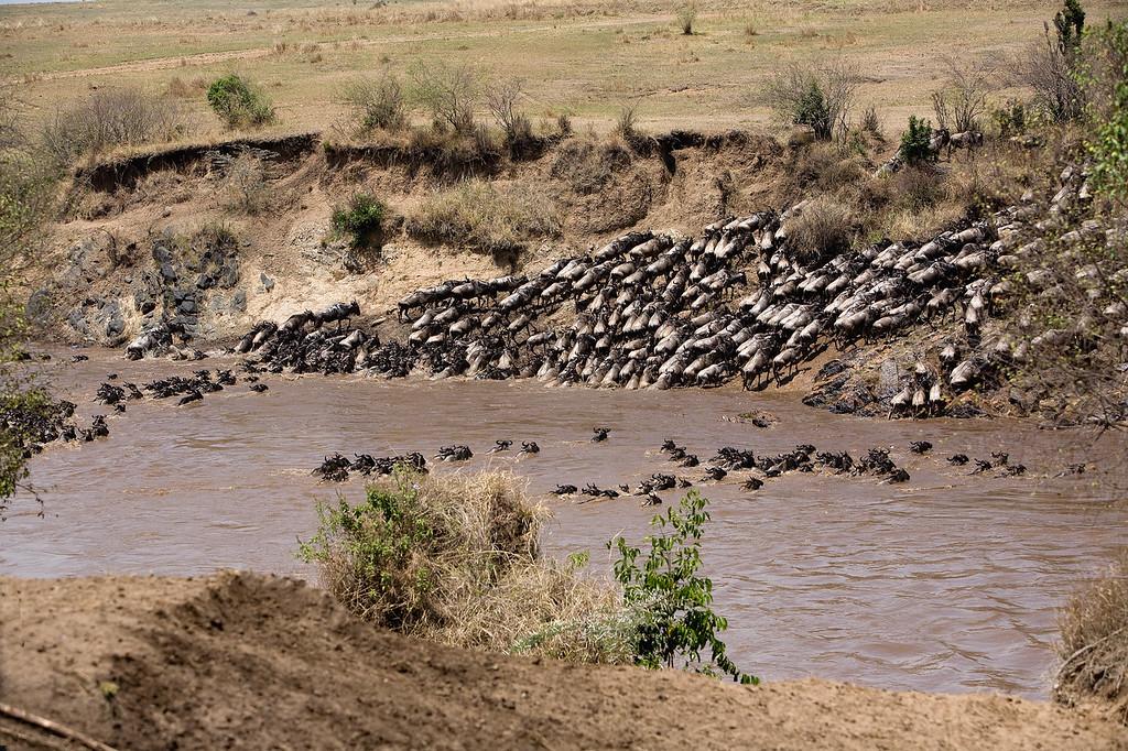 20100911_Maasi Mara_481