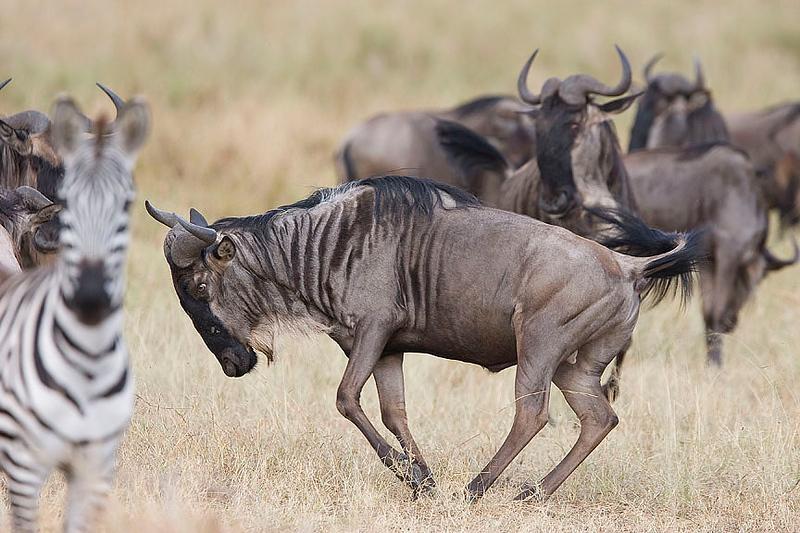 2007 07 25 Masai Mara 347