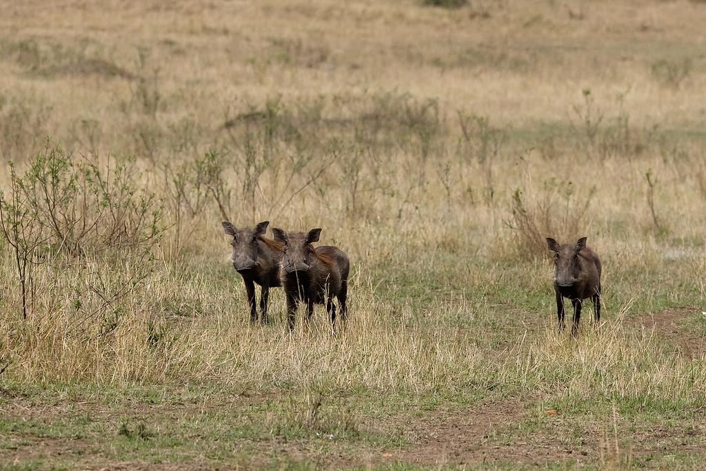 20100911_Maasi Mara_314