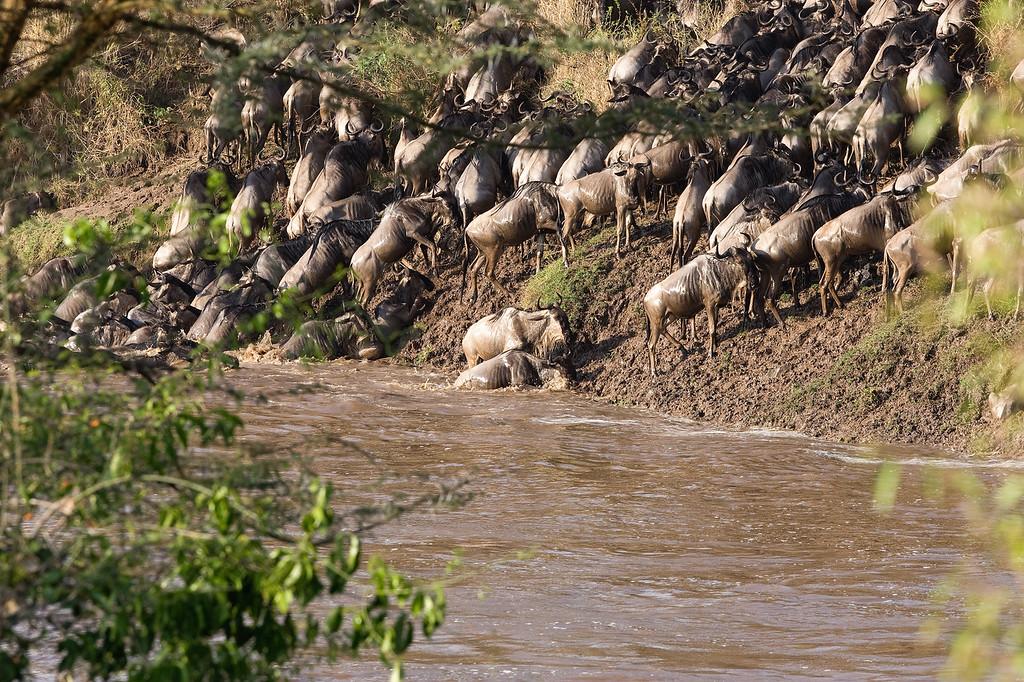 20100911_Maasi Mara_256