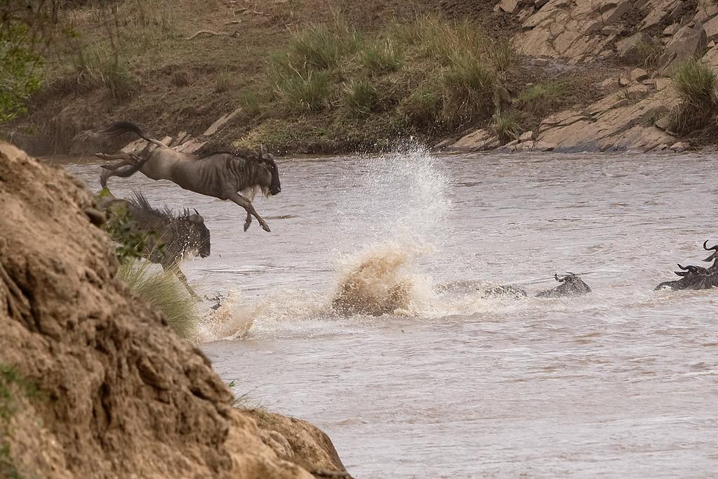 20100911_Maasi Mara_086