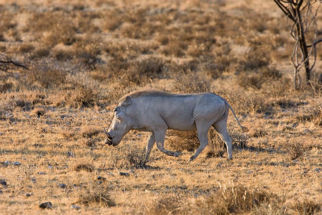 20100903_Samburu_108
