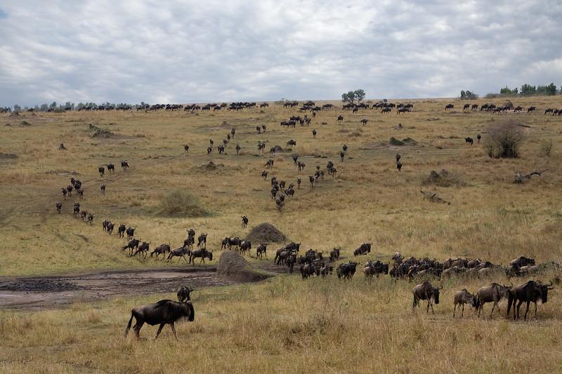 20100910_Maasi Mara_661
