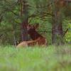 Elk sd