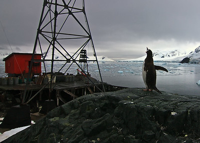 Penguin alert at Admiralte Brown Argentine Research Station, Antarctica