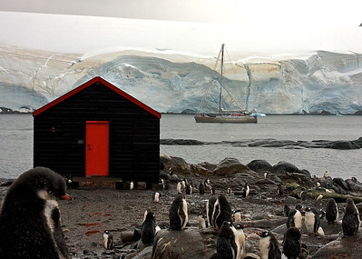 Gentoo Penguins at Camp Lockroy, Antarctica
