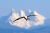1296 Snow Goose and Three Fingers Mountain