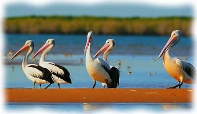 McArthur River Pelicans
