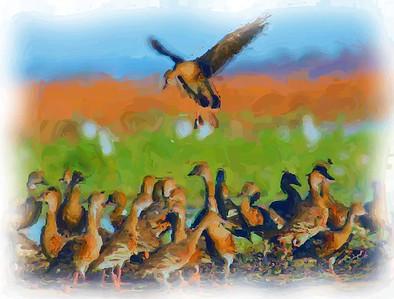 Whistle Duck Landing