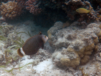 amidee mystery interesting fish 1