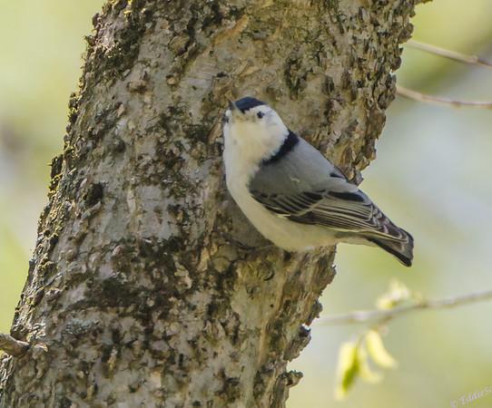 Allerton Park - Monticello IL, Birds