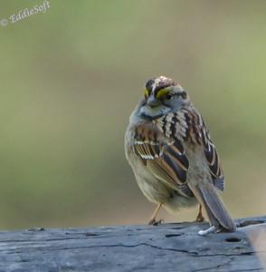 Birds of Allerton Park