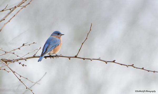 Birds of Jubilee State Park