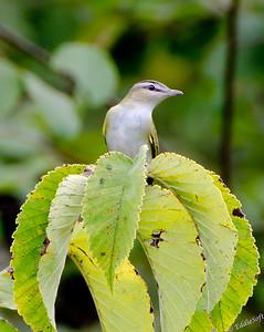 Wildlife - Birds Small