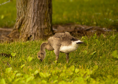 Wildlife - Birds of the Water