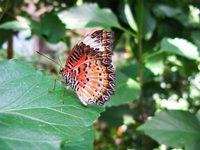 2013 0408 ECDS Butterfly Pavilion 30