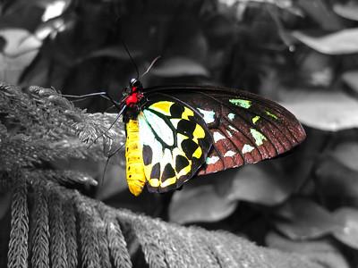 2013 0408 ECDS Butterfly Pavilion 72 select color