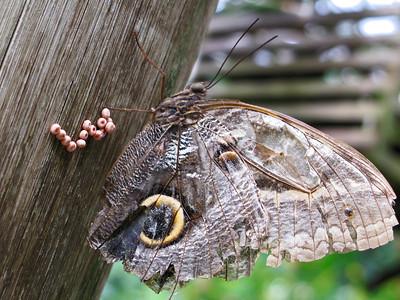 2013 0408 ECDS Butterfly Pavilion 79