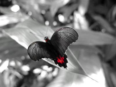 2013 0408 ECDS Butterfly Pavilion 48 select color