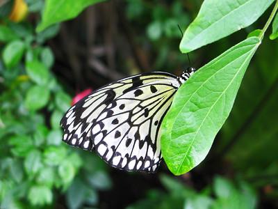2013 0408 ECDS Butterfly Pavilion 69