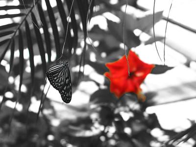 2013 0408 ECDS Butterfly Pavilion 61 select color